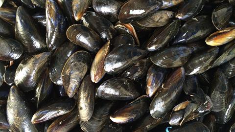 Fællesspisning: Madværkstedet går i fisk